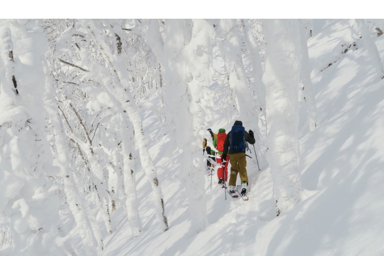 Touring ski in Hokkaido between white trees