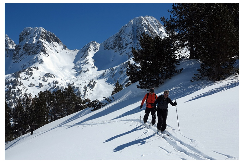 mountaineering skiers progressing through bosc de locampo on a superb blue sky day