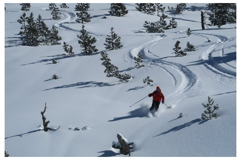 skier taking advantage of the fresh snow on untouched terrain