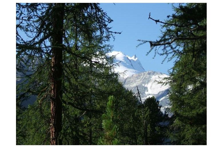 preciosa vista de las montañas nevadas en contraste con el verdísimo bosque